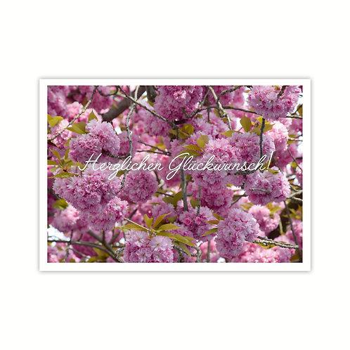 Glückwunschkarte Kirschblüte - Geburtskarten  4-seitig A6 inkl.Hülle