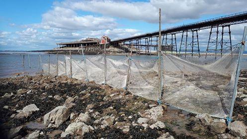 shrimp nets set out in the estuary