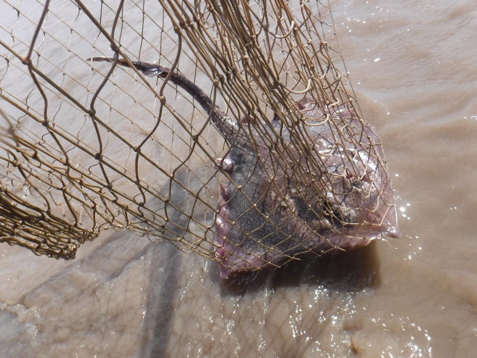 A rare catch