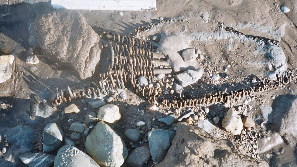 Ancient fishing baskets found on the lave net fishing grounds !