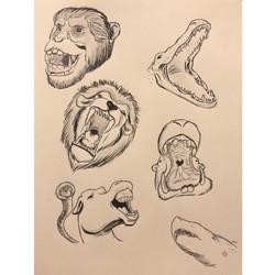 Day 8. Teeth