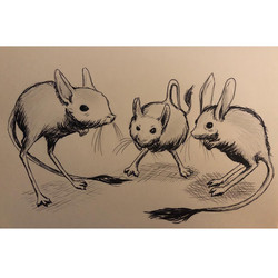 Day 6. Rodent