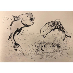 Day 1. Fish