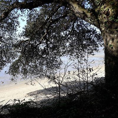 Lectures_sous_l'arbre_5_recadrée.jpg