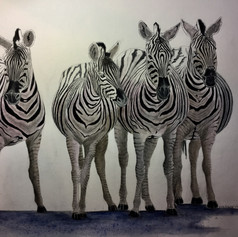 Zebra Quartet