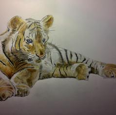Tired Tiger Cub
