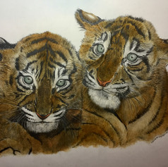 Tiger Cub Pair