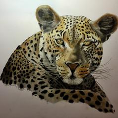 Leopard Glare