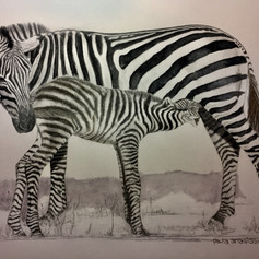 Zebra Dinnertime