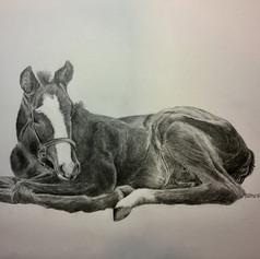 Sleepy Foal