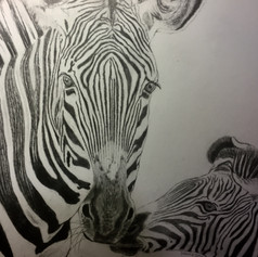 One and a half Zebras