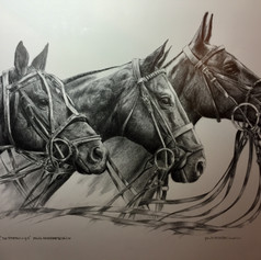 Argentine Polo Horses