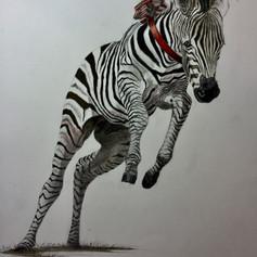 Red Ribbon Zebra Foal