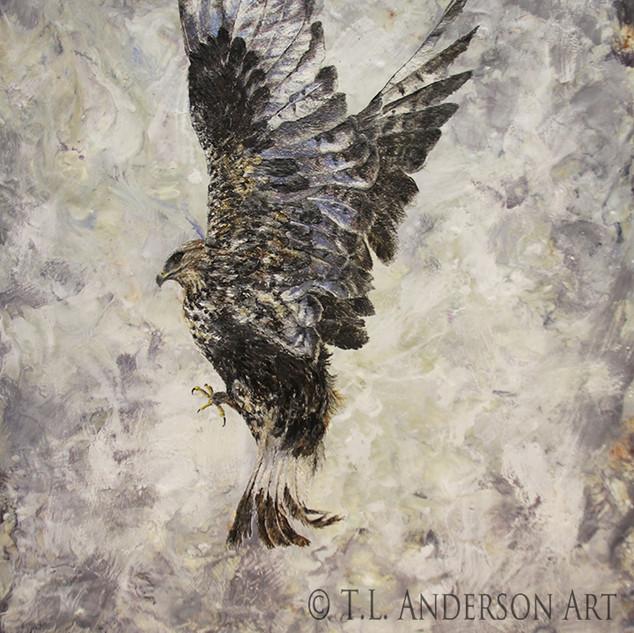 The Messenger - Rough Legged Hawk