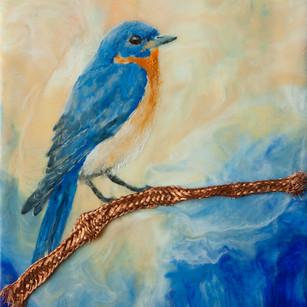 Bluebird and Copper