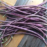 beans-yardlong.JPG