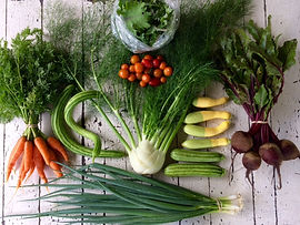 Ten Mothers Farm CSA