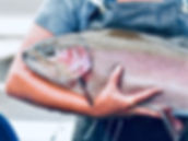 BROOD TROUT
