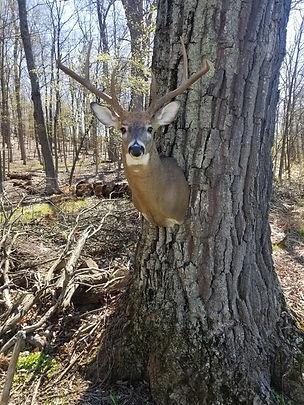 Deer Head 12.jpg