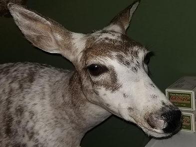 Deer Mount.jpg