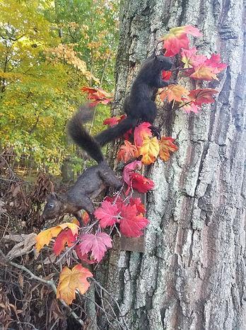 BlackSquirrels.jpg