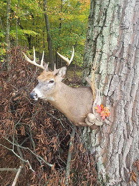 Deer Head 8.jpg