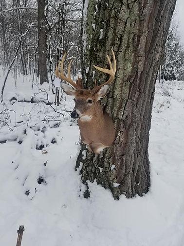 Deer Head 35.jpg