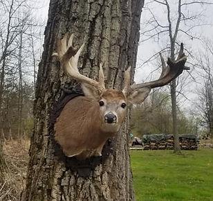 Deer%20Head%2019_edited.jpg