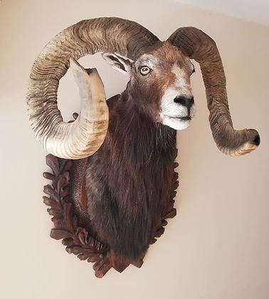 Sheep%201_edited.jpg