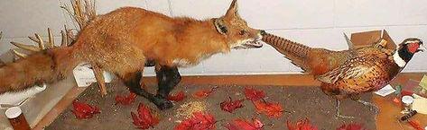 Fox_Pheasant_edited.jpg