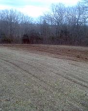 land clearing 9.jpg