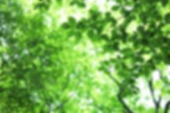 044sukagamino17103_TP_V1.jpg