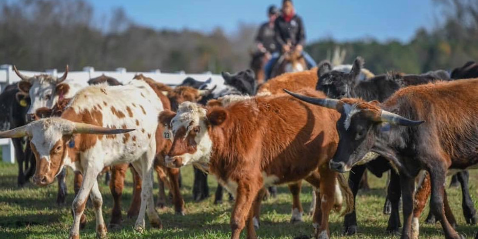Intro to Cattle Clinic