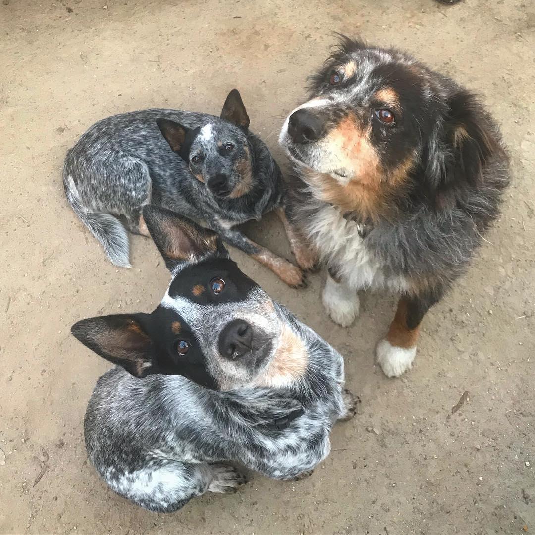 Rooster, Henri, Merlin