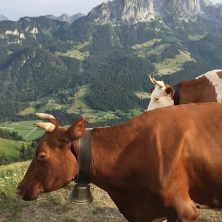 4 - Pascale Alp Auszeit.jpg
