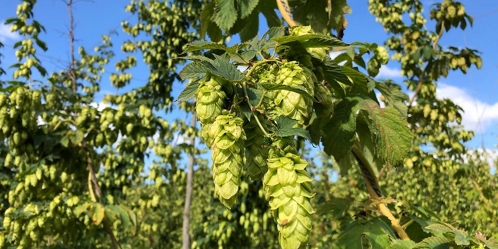 Green Hop Brew WATCH ONLINE