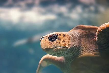turtle-3950341__340.webp