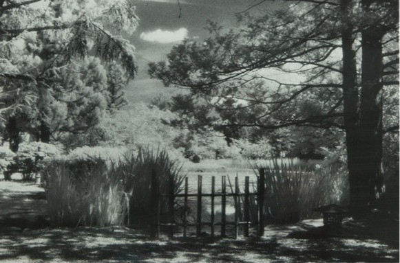 Fence and Trees by Ruth Clegg