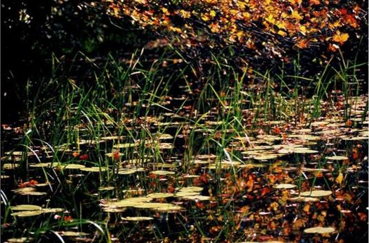 Farm Pond, Trustom by Herman Miller