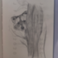 Day 26 - Racoon (Small).png