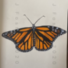 Day 25 - Monarch Butterfly (Small).png