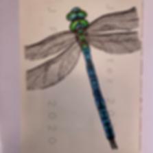 Day 15 - Emperor Dragonfly (Medium).PNG