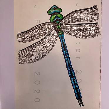 Day 15 - Emperor Dragonfly (Medium).PNG