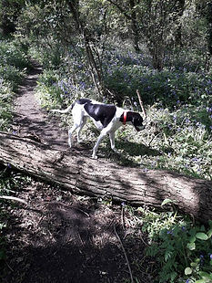 HHook - Walk to Bluebell Woods with Izzy