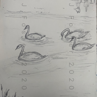 Day 22 - Swans (Small).png
