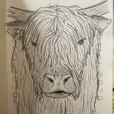 Day 4 - Highland Cattle.PNG
