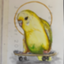 Day 6 - Skateboard Budgie.PNG