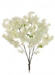 Ivory Cherry Blossom