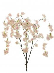 Pink Weeping Cherry Blossom