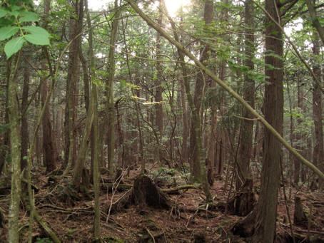 Aokigahara – A holtak erdeje